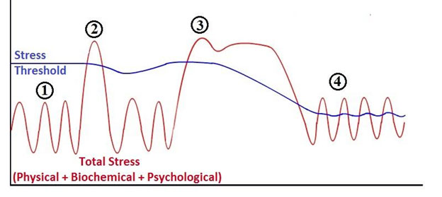 """Stress"", Lifestyle and the Nervous System - Part 2"
